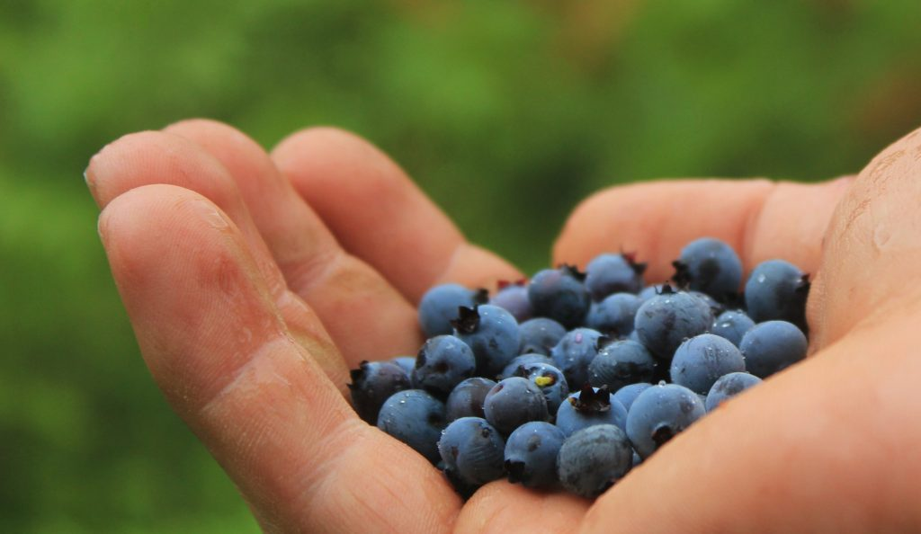 blueberries-801571_1920