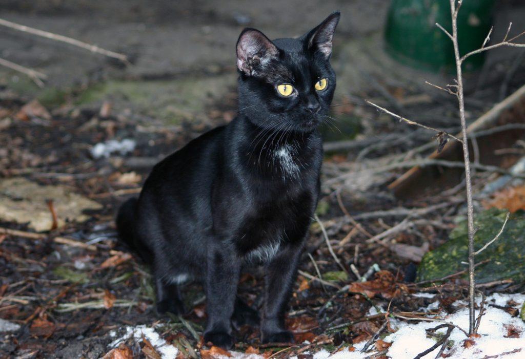 cat-1233058_1920