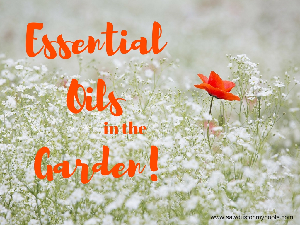 Essential Oils in the Garden!