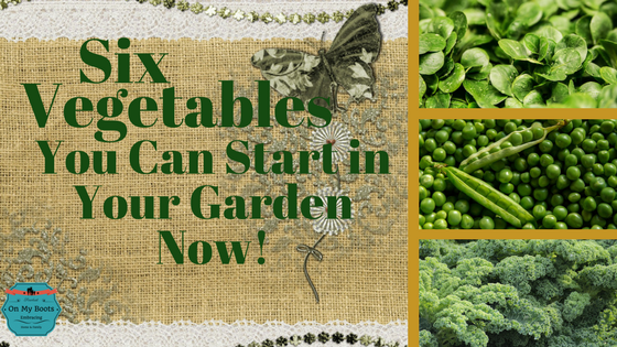 Six Vegetables You Can Start in your Garden Now!