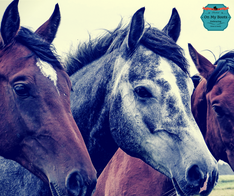 The Horses Prayer